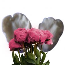 Вайнер лепесток тюльпана
