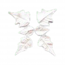 Пуансетия