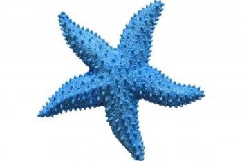 Силиконовый молд морская звезда