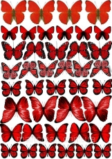 Вафельная картинка A4 Бабочки 10