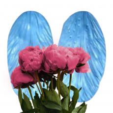 Вайнер лепесток лилии Casablanca