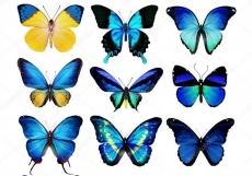 Вафельная картинка A4 Бабочки 14