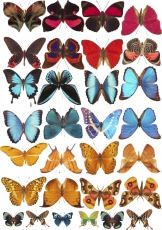 Вафельная картинка A4 Бабочки 16