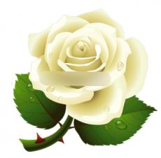 Набор каттеров Роза 12 шт